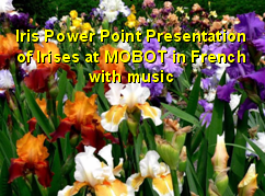 Iris PowerPoint Presentation of Irises at MOBOT.  L' Hymne a l' Amour, Sung by Edith Piaf of France, known as 'The Sparrow.'  Click to download